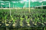 TP Hồ Chí Minh đặt mục tiêu giá trị sản xuất nông nghiệp đạt 630-650 triệu đồng/ha
