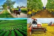 Phát triển kinh tế tập thể năng động, hiệu quả, bền vững