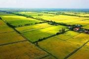 Chuyển mục đích sử dụng hơn 50 ha đất trồng lúa ở Long An