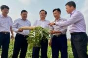 Câu chuyện 'Ngôi làng thần kỳ' và thông điệp cho phát triển nông sản