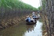 """""""Ngồi cùng thuyền"""", người trồng mía vẫn chưa là đối tác đúng nghĩa của nhà máy đường"""