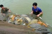Khai thác hải sản vùng khơi, gắn với du lịch sinh thái