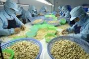 Xuất khẩu hạt điều thu về 237 triệu USD trong tháng 4