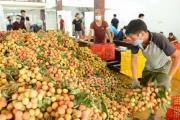 Phó Thủ tướng chỉ đạo hỗ trợ tiêu thụ nông sản tỉnh Bắc Giang
