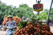 Nông sản mùa dịch: Những thách thức và sự đồng lòng tìm hướng đi mới
