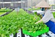 Đầu tư 440 tỷ đồng hỗ trợ hợp tác xã phát triển vùng nguyên liệu nông lâm sản