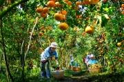 """Phát triển nông nghiệp bền vững từ các hình thức liên kết kinh tế: Nhìn từ mô hình """"Hội quán nông dân"""" ở tỉnh Đồng Tháp"""