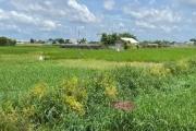 "TP HCM kiến nghị ""cởi trói"" gần 700 ha đất"