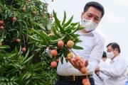 Bộ trưởng Công Thương: Đặc sản Việt Nam sẽ từ nhà sản xuất đến tận tay người tiêu dùng quốc tế