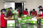 Nông sản các tỉnh phía Nam đang cần hỗ trợ đầu ra