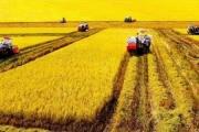 Không đổi thành tích xuất khẩu lấy rủi ro cho nông dân