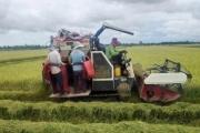 Đôn đáo thuê máy gặt lúa