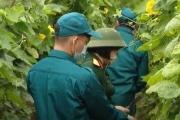 Bộ đội hỗ trợ người dân thu hoạch nông sản