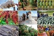 Chính phủ chỉ đạo thúc đẩy sản xuất, lưu thông, xuất khẩu nông sản