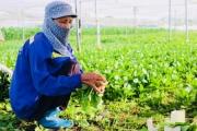 Gỡ ''điểm nghẽn'' trong sản xuất nông nghiệp: Bảo đảm nguồn cung cho thị trường