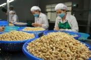 Xuất khẩu hạt điều sang thị trường Mỹ giữ vững đà tăng trưởng
