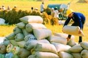 Giá gạo xuất khẩu lại tăng trở lại