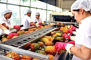 Việt Nam với tiềm năng lớn xuất khẩu rau quả sang EU