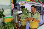 Kỳ vọng sâm Việt vươn ra thế giới: Rào cản sâm giả