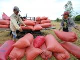 Giá lúa tăng mạnh, nông dân ĐBSCL phấn khởi