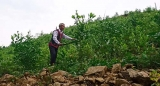 Để nâng cao hiệu quả tái phân bổ đất lâm nghiệp: Cần chính sách mới