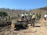 Làm sao giữ rừng?