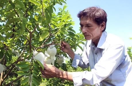 Tây Ninh thu hút đầu tư vào nông nghiệp công nghệ cao