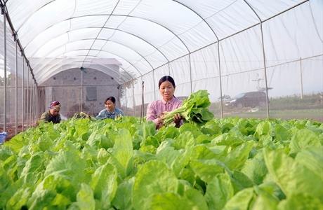 Khơi thông nguồn vốn cho vay phát triển nông nghiệp công nghệ cao