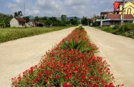 Rực rỡ những con đường hoa nông thôn mới