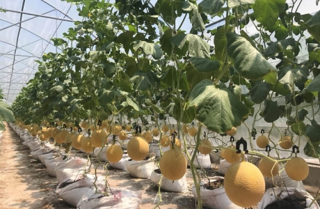 Đầu tư nông nghiệp nhiều rào cản