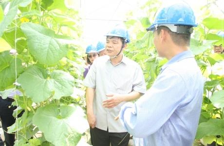 BR-VT: Hơn 1.000 ha sản xuất nông nghiệp ứng dụng công nghệ cao