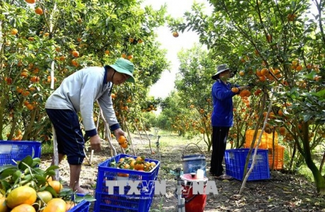 Khu vực nông nghiệp tăng trưởng cao nhất trong 5 năm qua