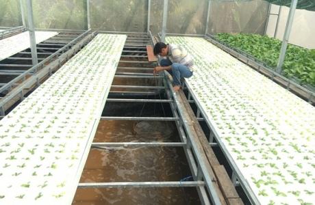 Huyện Nhà Bè phát triển nông nghiệp công nghệ cao