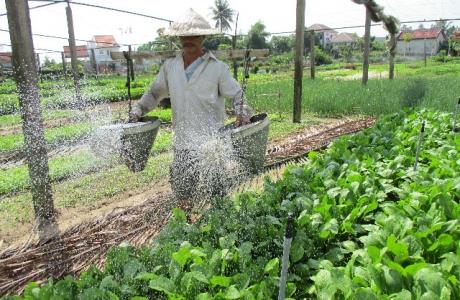 Quảng Nam: Cả làng