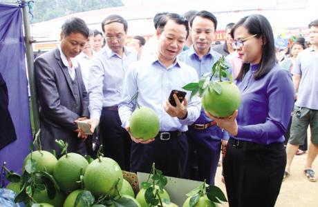 Nông dân làm giàu nhờ cây ăn quả trồng trên đất dốc