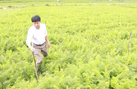 Chủ tịch xã mang giống lúa mới giúp dân đổi đời