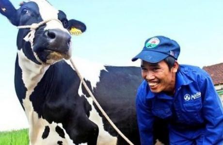 Công ty sở hữu Sữa Mộc Châu từ chối đề nghị chào mua của Vinamilk