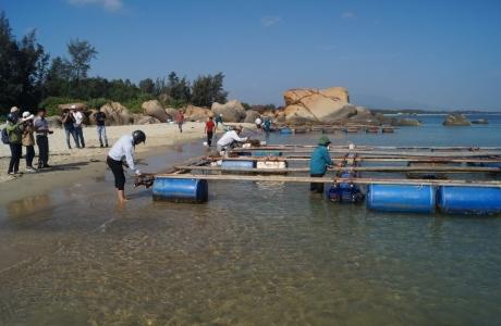 Quảng Ngãi: Tháo dỡ lồng bè, chấm dứt nuôi cá trên vùng biển Dung Quất