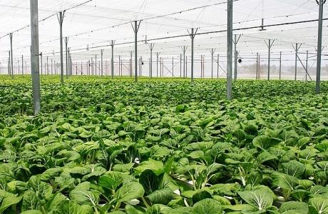 Xu hướng nông nghiệp sạch