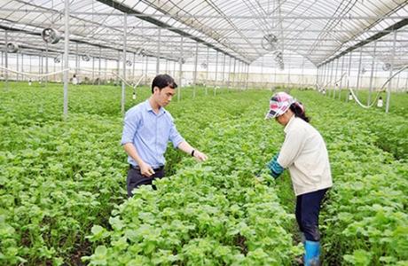 Bắc Ninh đã có 41 cơ sở trồng trọt ứng dụng công nghệ cao