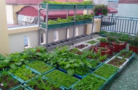 Nông nghiệp trong lòng đô thị: Tại sao không?