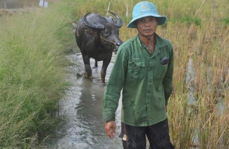 Cạn dòng Mekong: Bài 3 - Tứ giác Long Xuyên đóng cống giữa mùa lũ, chuyện chưa từng có