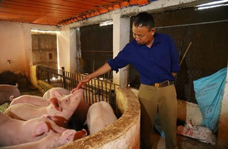 Bắc Giang: Chuyện 55 cây vàng và kỳ tích lão nông Đầm Lác