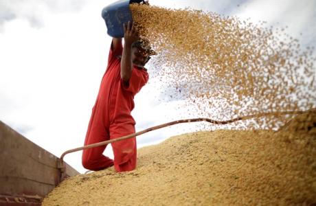 'Khủng hoảng ngô, đậu' cận kề nông dân Mỹ