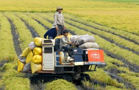 Đột phá công nghệ, nâng cao giá trị gạo Việt