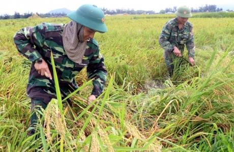 Hàng vạn hecta lúa Hà Tĩnh, Nghệ An 'chìm nghỉm' ngoài đồng: Bài học buồn tránh lặp lại
