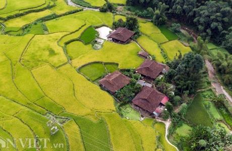 Ngỡ ngàng mùa lúa chín ở Cao Bằng nhìn từ camera bay