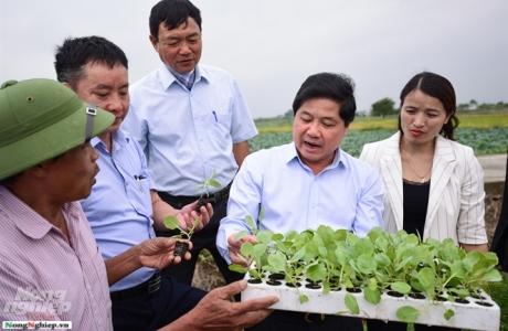 Mô hình liên kết sản xuất cây vụ đông giúp nông dân làm giàu