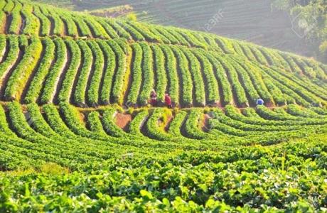 Thái Lan 'tung' 5 tỷ bạt cho nông dân trồng rừng