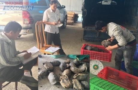 Gia Lai: Bắt xe tải vận chuyển 251kg động vật quý hiếm